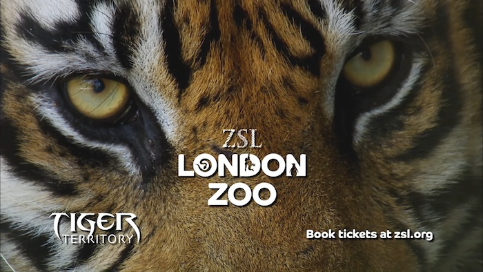 London Zoo – Tiger Territory