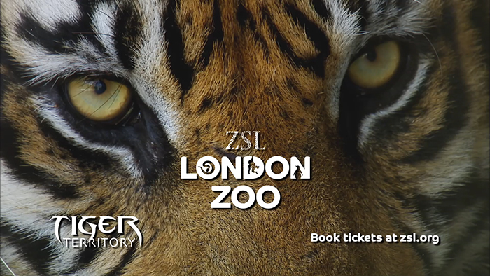 London Zoo – Tiger Territory